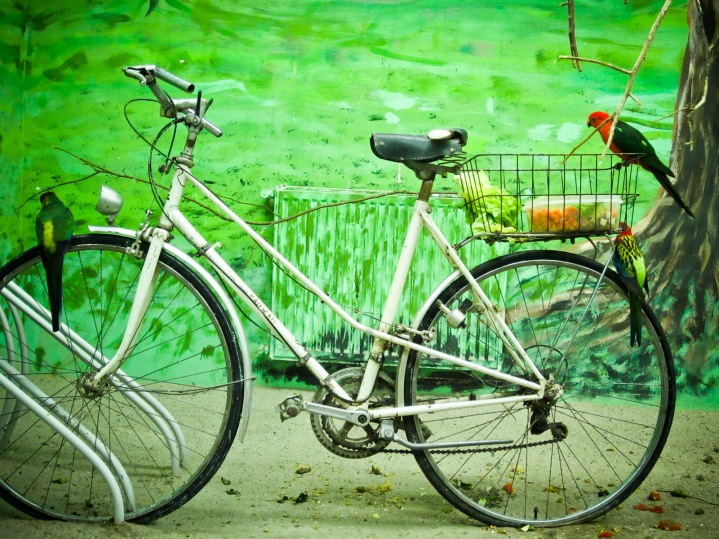 Birds on a Bicycle